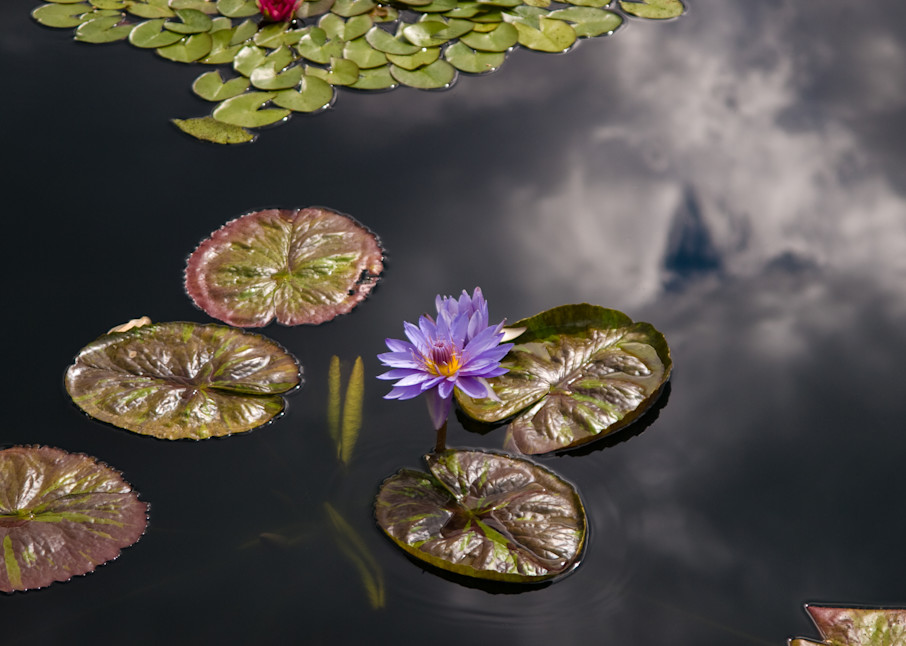 Water Lilies and Sky