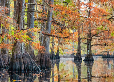 Tranquility - Louisiana swamp fine-art photography prints