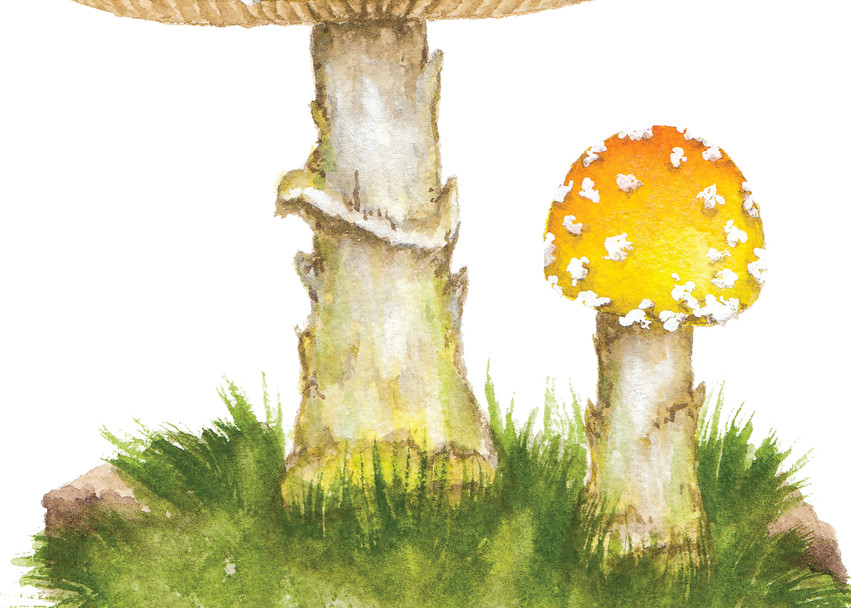 Amanita Frostiana  Art | Cool Art House - online art gallery with hip emerging artists. Collect cool art you can view on your own wall before you invest!