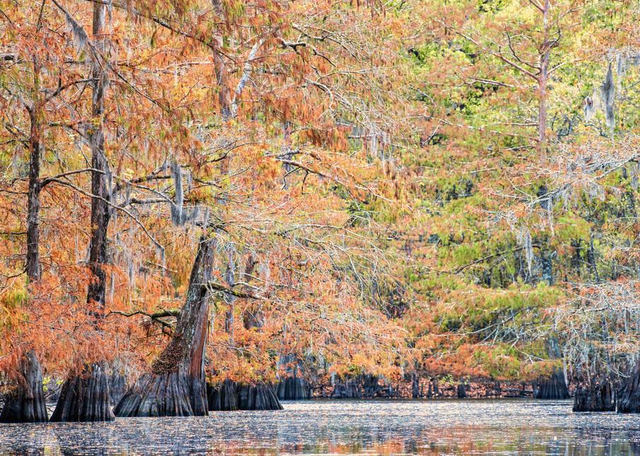 Fall on 2 O'Clock Bayou - Louisiana swamps fine-art photography prints