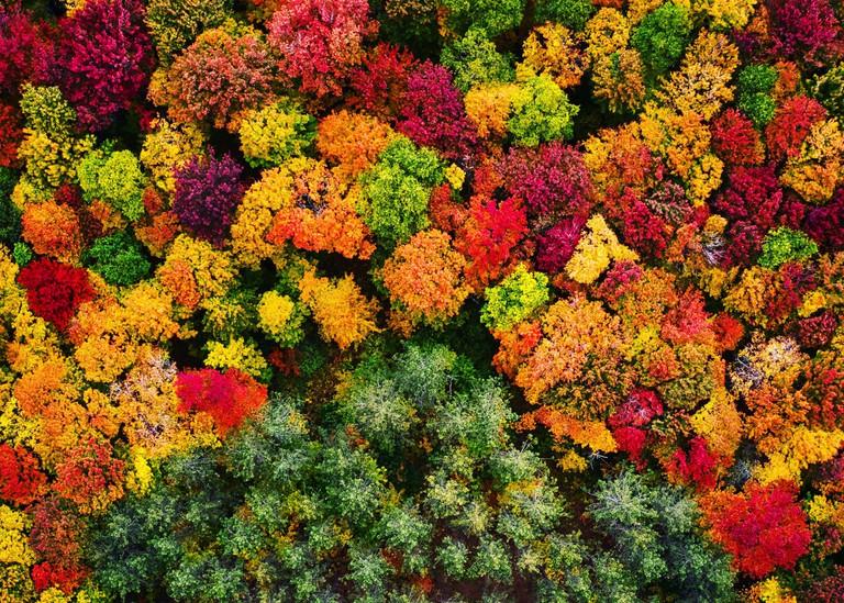 Fruity pebble trees in Michigan's Upper Peninsula