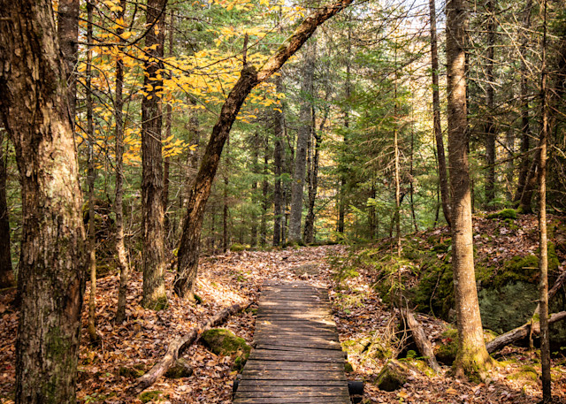 Path Photography Art   Scott Krycia Photography
