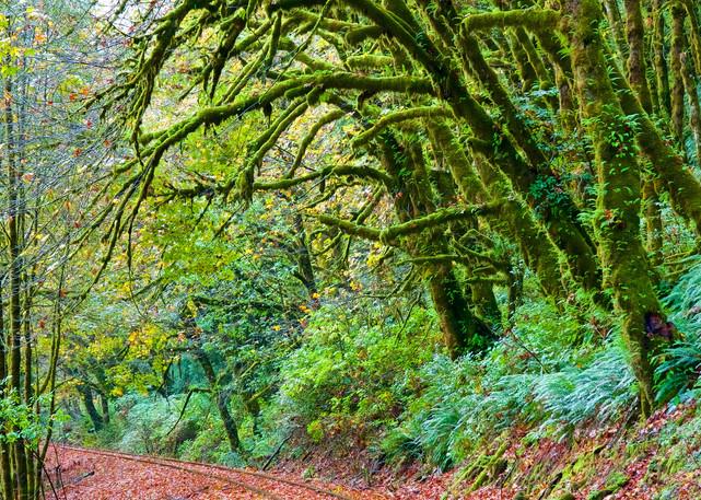 Railroad Tracks And Moss Trees Art | Shaun McGrath Photography