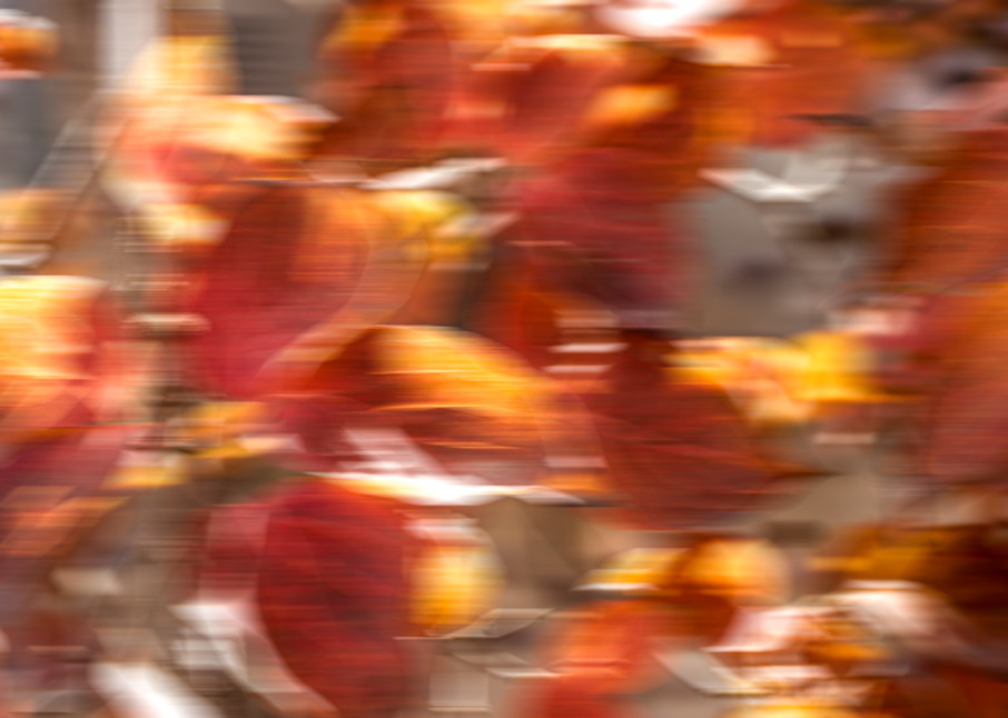 Dogwood - fall colored leaves in an abstract digital photo art image photograph print