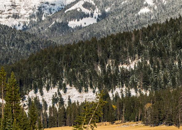 Buffalo Crossing Photography Art | Colorado Born Images