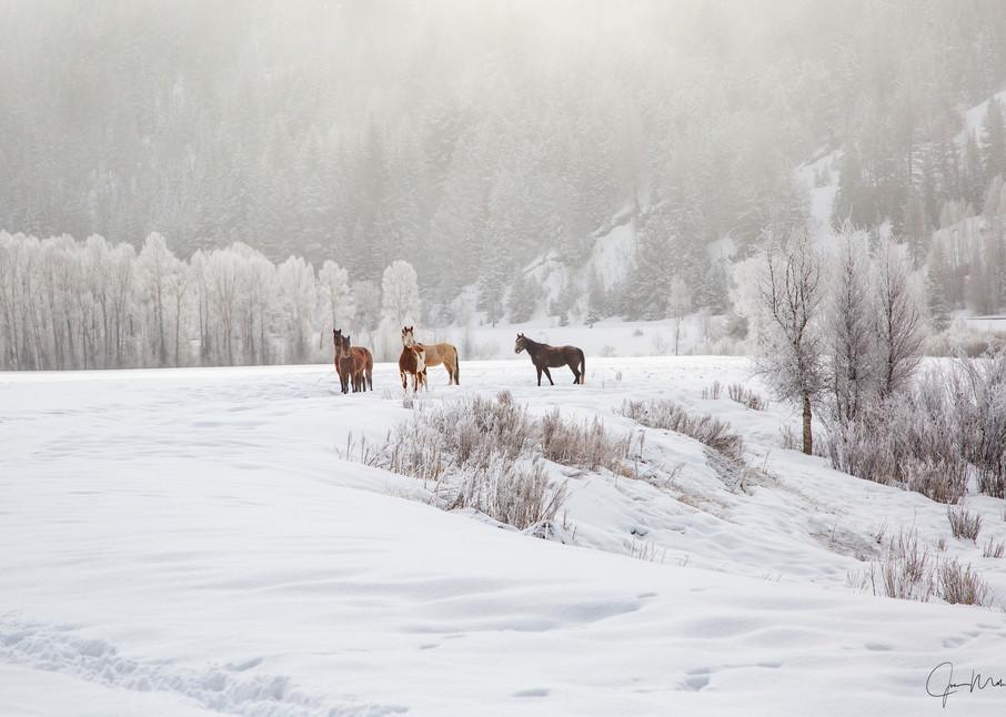 Five horses posing in the snow in the Colorado rockies