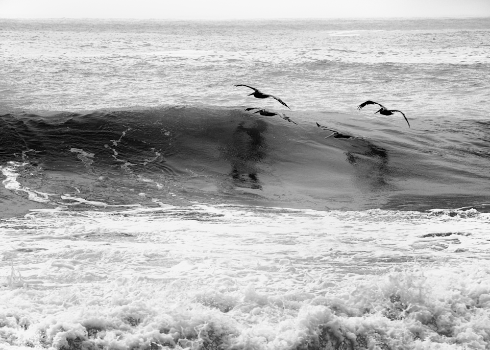 Two Pelicans Skimming The Waves  Photography Art | Hatch Photo Artistry LLC
