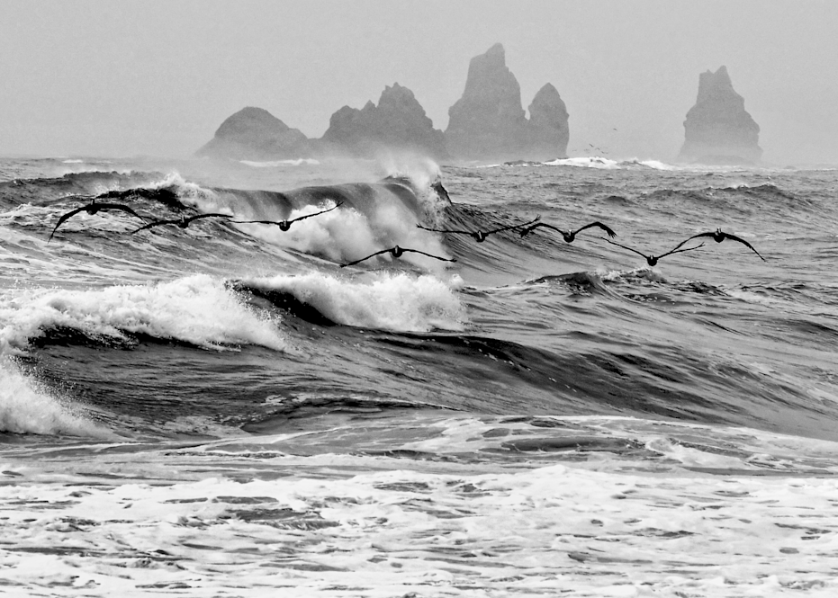Pelicans Skimming The Waves Photography Art | Hatch Photo Artistry LLC
