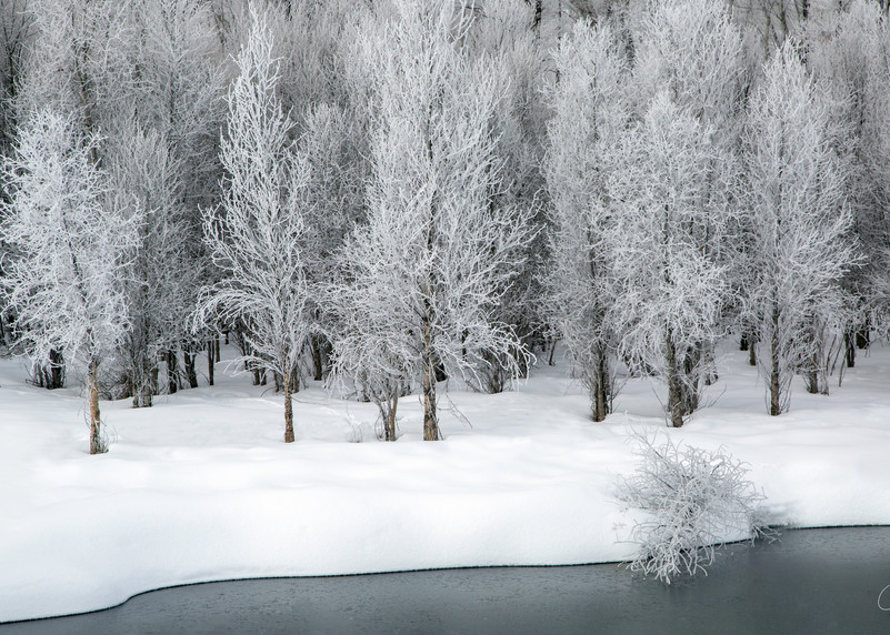 Snow, Colorado, trees, photography, white, black and white