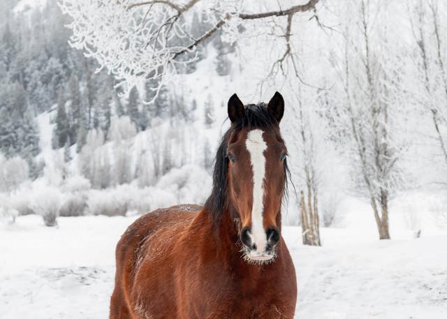Horse, Colorado, snow, winter, morning