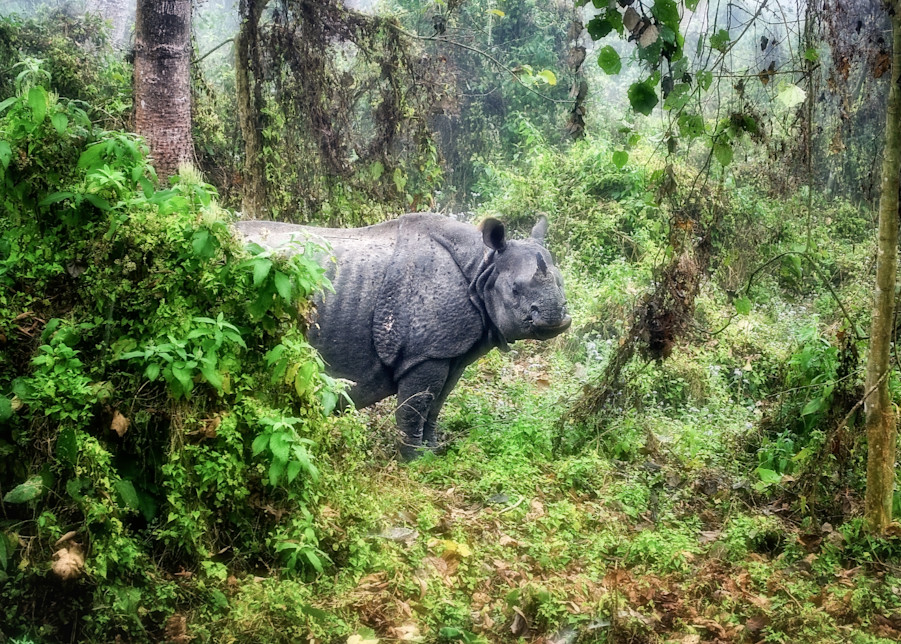 Mama Rhino Protecting Her Young Photography Art | Grace Fine Art Photography by Beth Sheridan