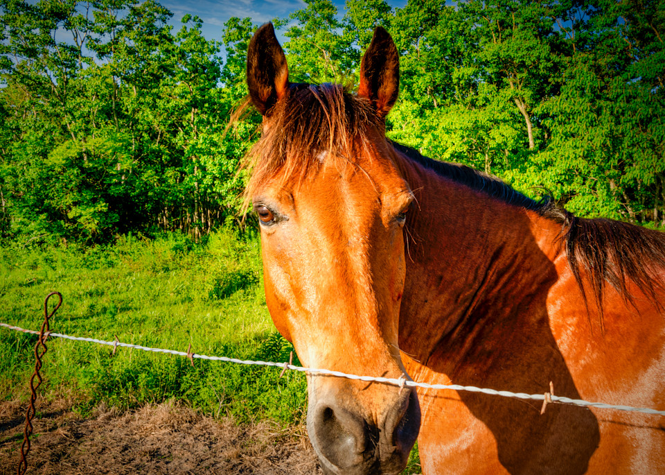 Horse In Pasture Photography Art   Grace Fine Art Photography by Beth Sheridan