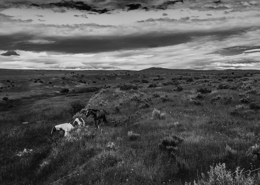 Descendants Of A Massacre  Photography Art | Harry John Kerker Photo Artist