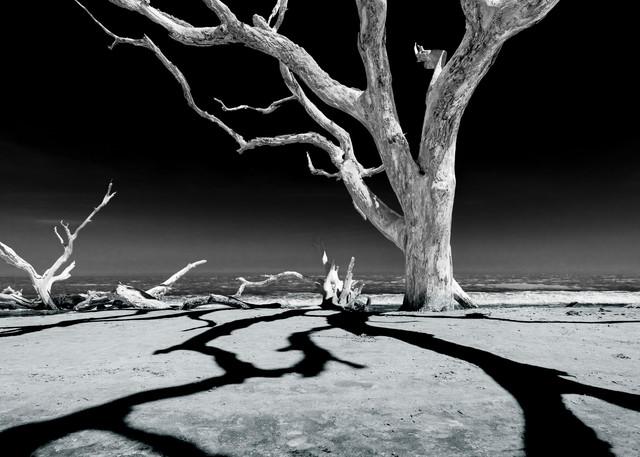 Shadowtree Photography Art | kramkranphoto