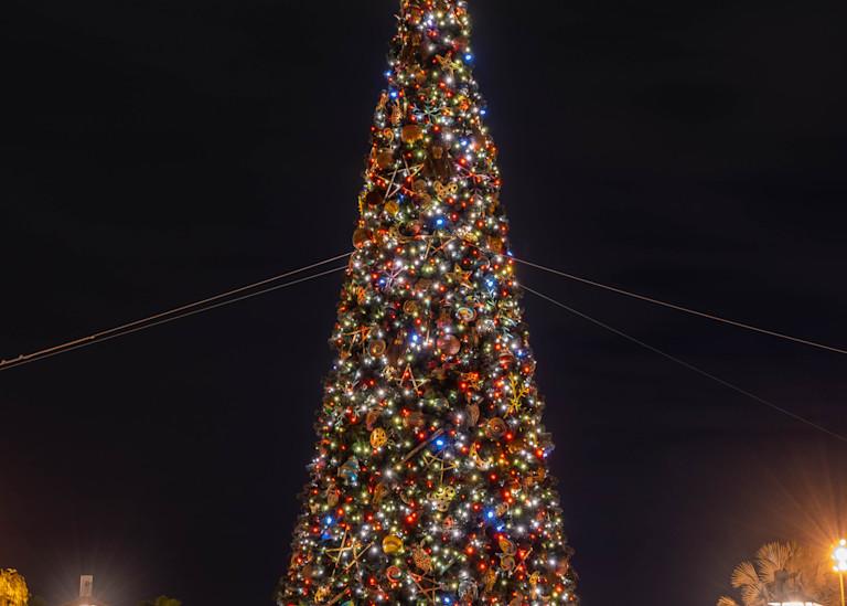 Animal Kingdom Christmas Tree Photography Art   William Drew Photography