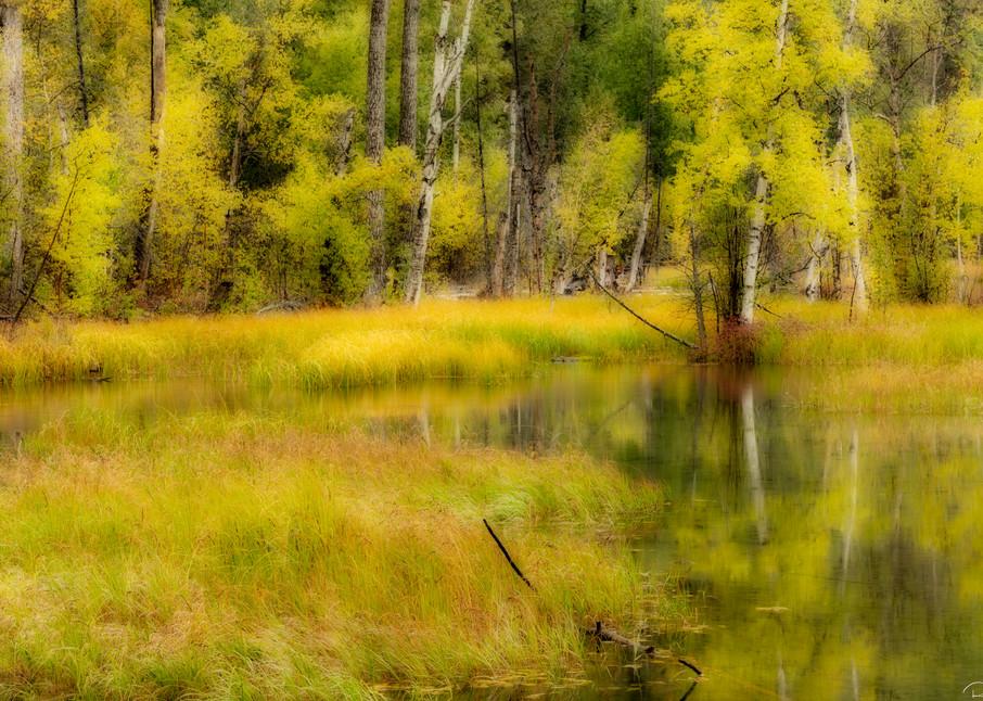 Fall colors at pond in Alaska