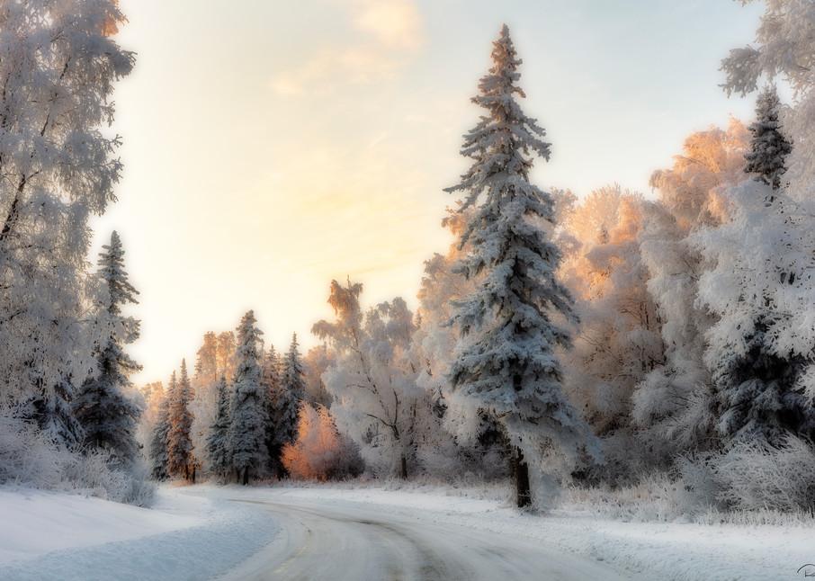 Hoarfrost covered  trees Alaska
