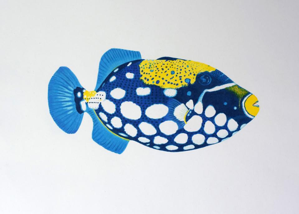 Trigger Fish No 1 Open Edition Print Art   juliesiracusa
