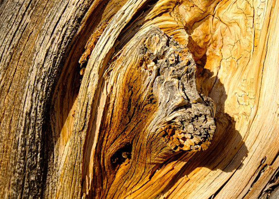 Weathered cedar wood grain  in Arches National Park, Moab, Utah USA