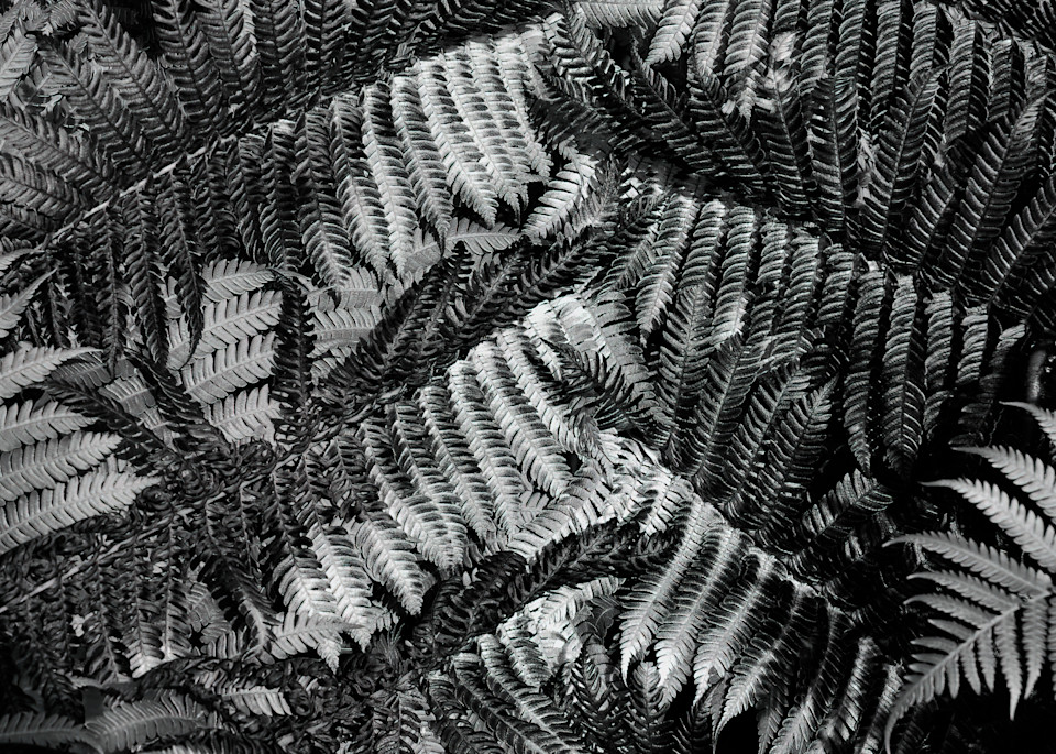 Patchwork Fern Photography Art   Ed Sancious - Stillness In Change