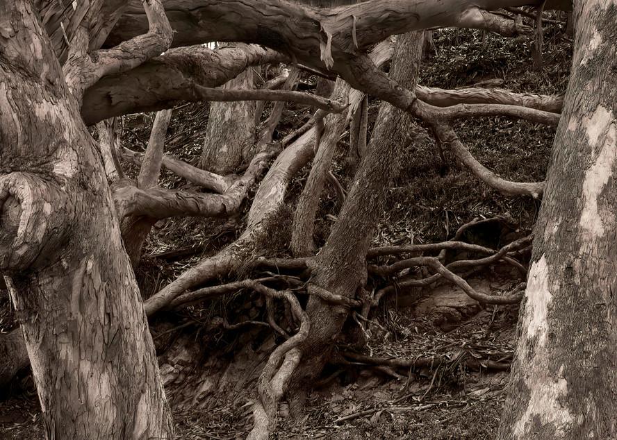 Community Photography Art | Ed Sancious - Stillness In Change