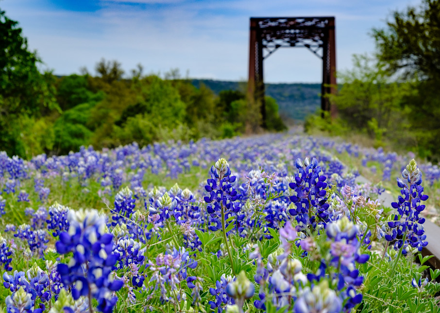 Texas Bluebonnet Railroad