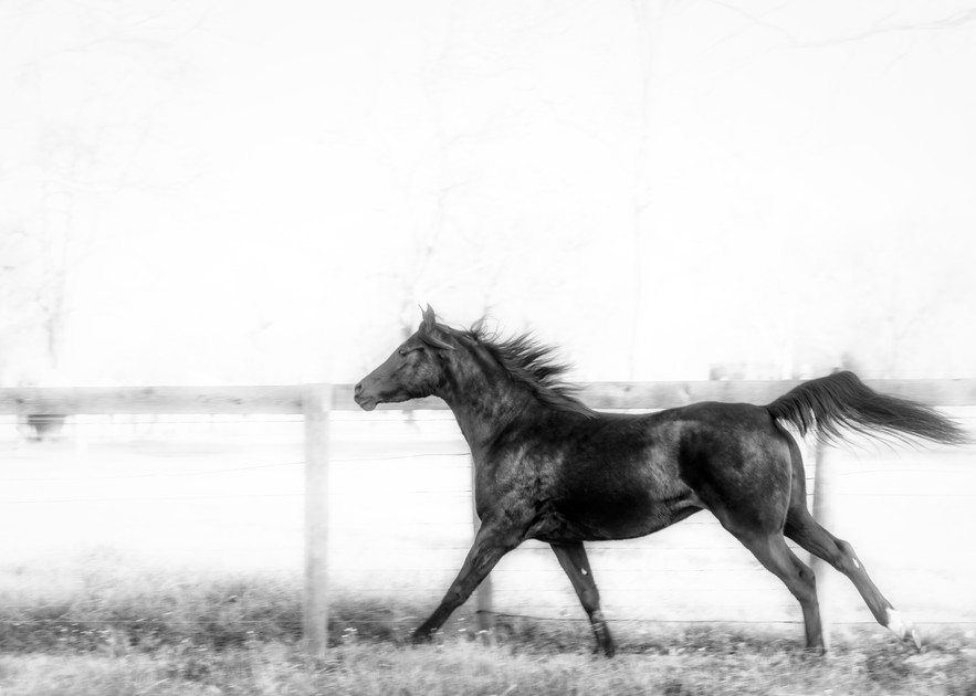 In The Wind Photography Art | Grace Fine Art Photography by Beth Sheridan
