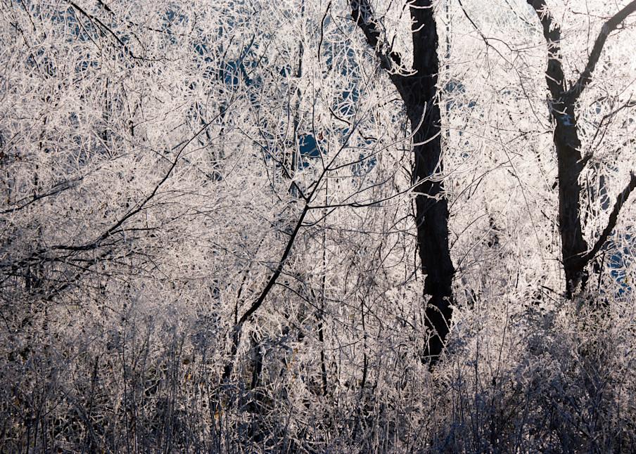 Riverbank (Winter) Art | Anna Jaap Studio