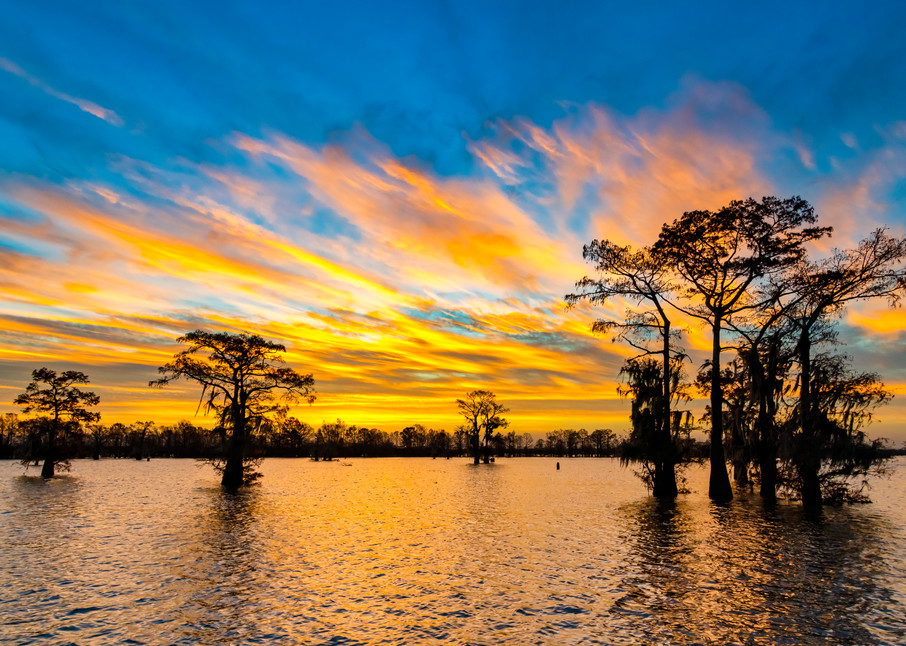 New Year Rising - Louisiana swamp sunrise photography prints