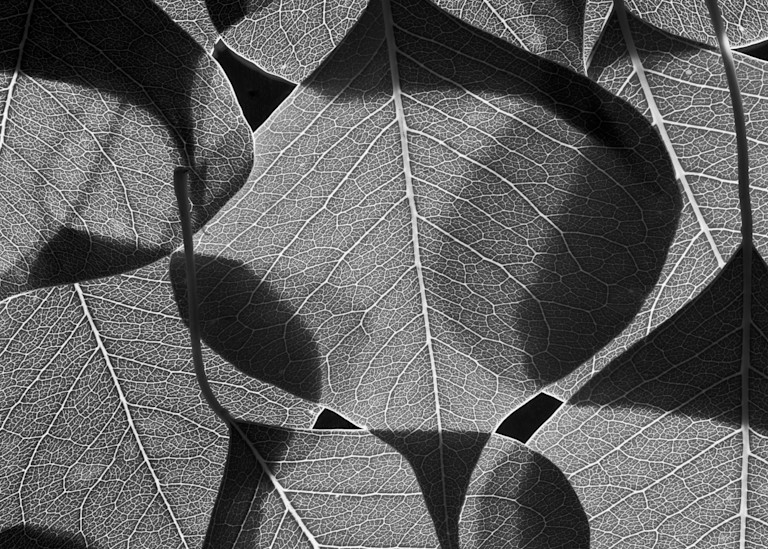 Chinese Tallow Leaves 2002 Photography Art | Rick Gardner Photography