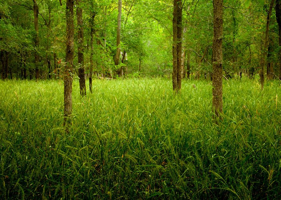 Forest Near Gonzales, Texas Photography Art | Rick Gardner Photography