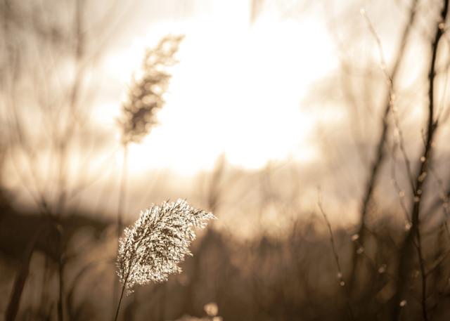 Quiet Afternoon Art   TG Photo