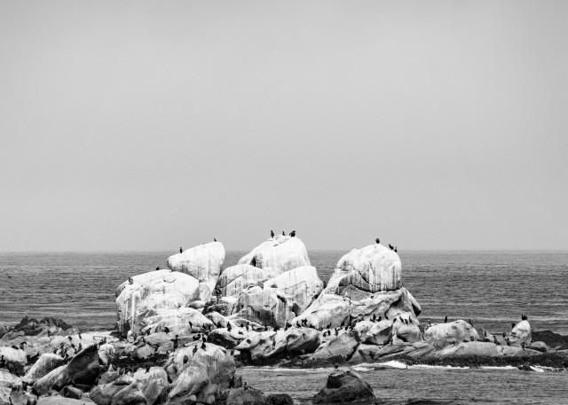 Bird White Art | James Alfred Friesen