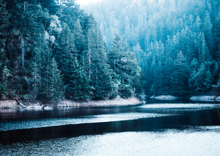 Into the Blue - late afternoon forest in California photograph print