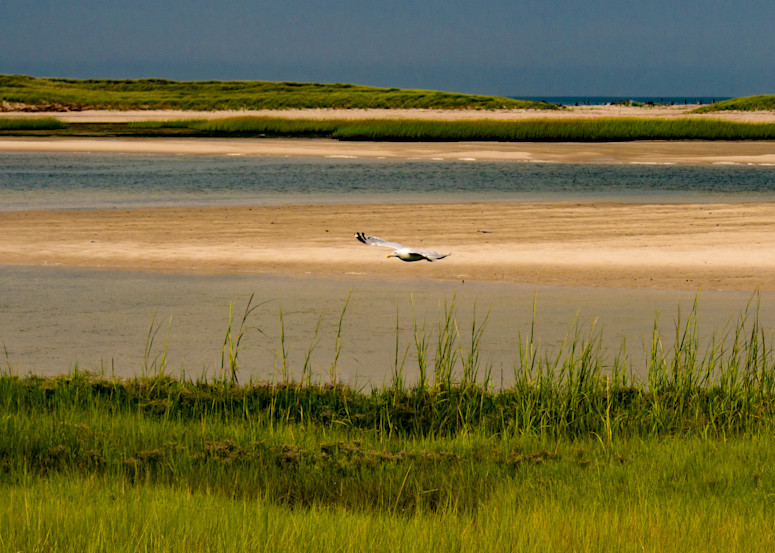 Seagull Flying, Yarmouth  Photography Art | Ben Asen Photography