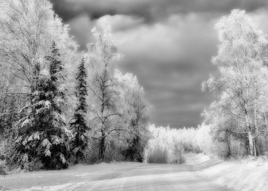 Hoarfrost covered  trees in Alaska