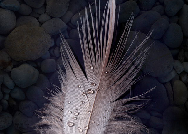 Floating Feather Photography Art   Rick Gardner Photography