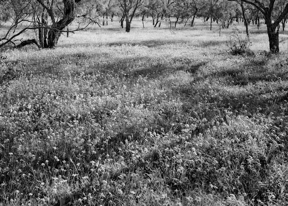 Wild Flowers, Campwood, Texas Photography Art | Rick Gardner Photography