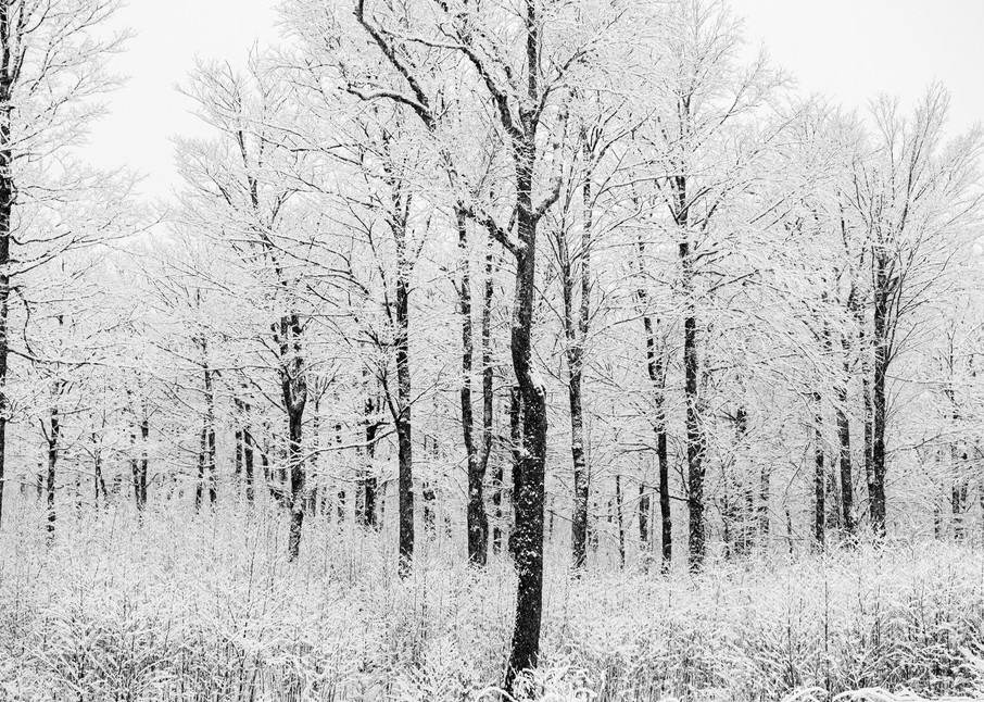 Bw Winter Trees V1 Photography Art | Kurt Gardner Photogarphy Gallery