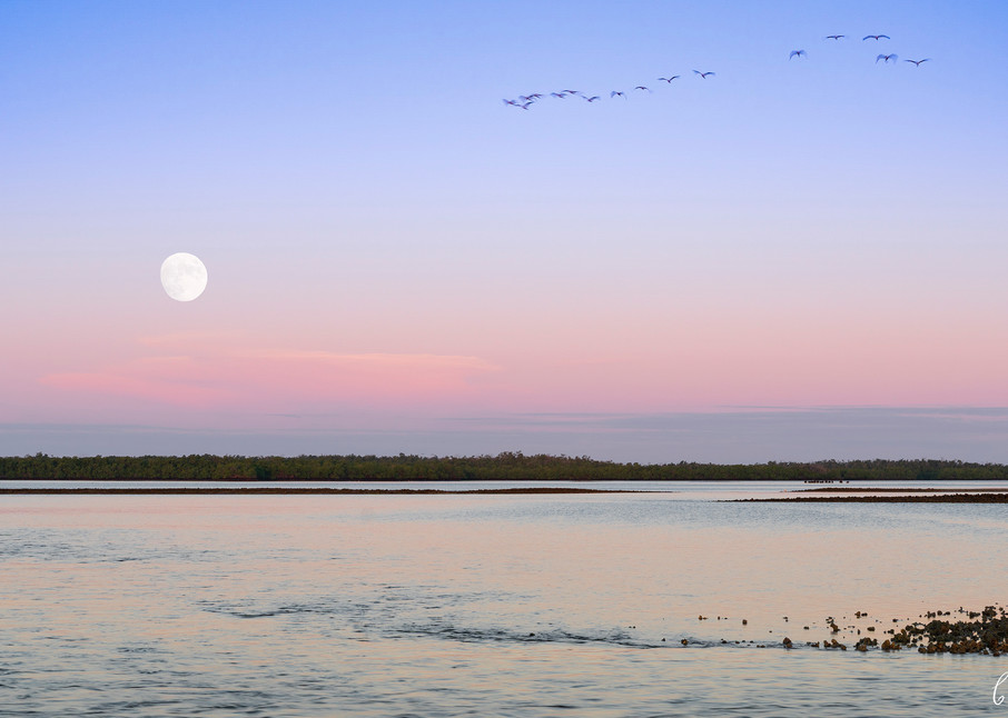 Constance Mier Photography in the Everglades - fine art waterscape scenes
