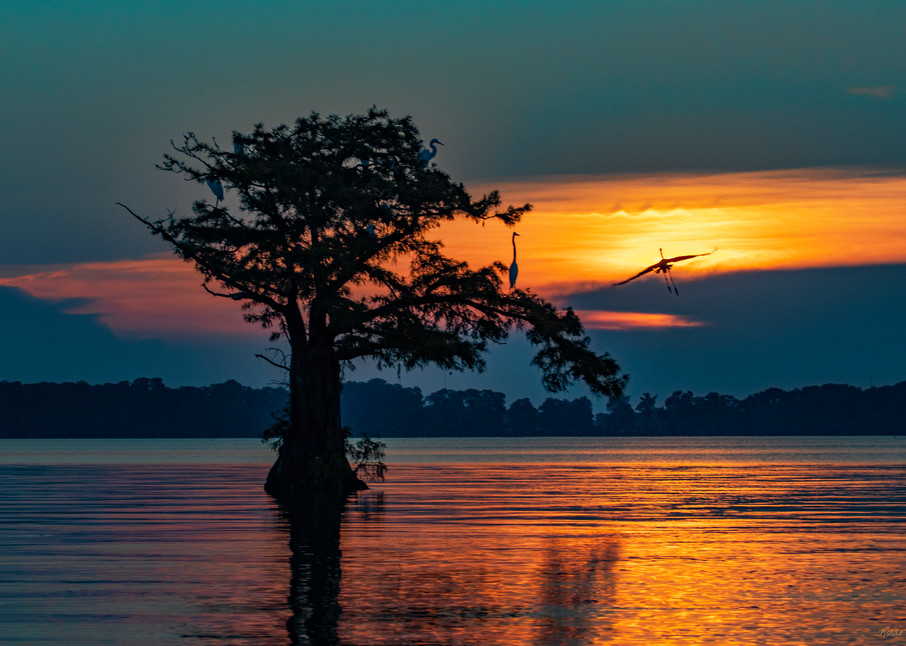 Into The Night   Egret And Cypress Tree  7840 Reelfoot Lake Art | Koral Martin Fine Art Photography