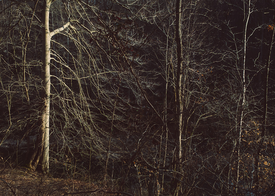 Nature Color 8401 Photography Art | Dan Chung Fine Art