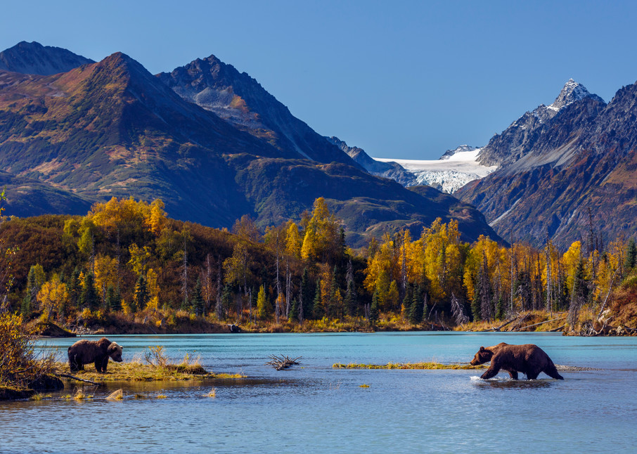 Coastal Grizzly bears on sand bar in Crescent River in Lake Clark National Park. Chigmit Mountains and glacier in background.  Alaska    Photo by Jeff Schultz/SchultzPhoto.com  (C) 2017  ALL RIGHTS RESERVED