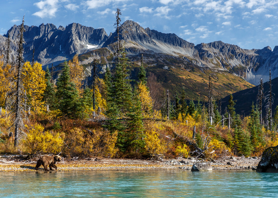 Coastal Grizzly bear walks along Crescent Lake with Chigmit Mountains in Lake Clark National Park.  Fall/Autumn   Photo by Jeff Schultz/SchultzPhoto.com  (C) 2017  ALL RIGHTS RESERVED