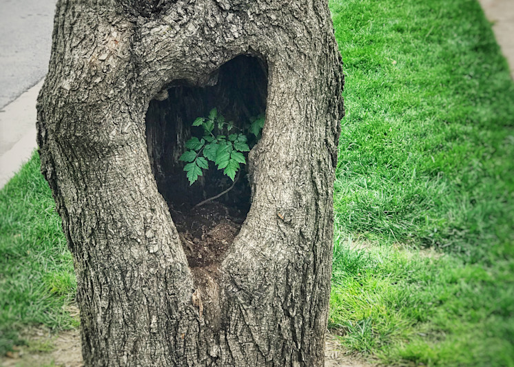 tree-heart, photograph, lost-valentine