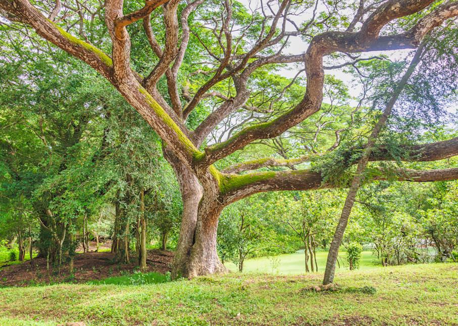 A Treen in Angkor Wat | Susan J Photography