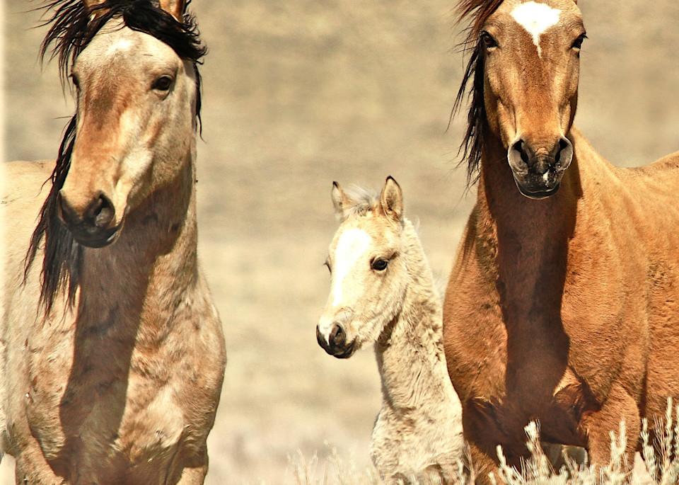 A captivating wild horse family print
