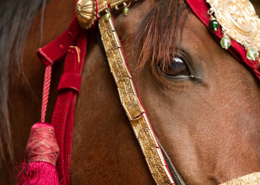 Close up of decorated Marwari horse.