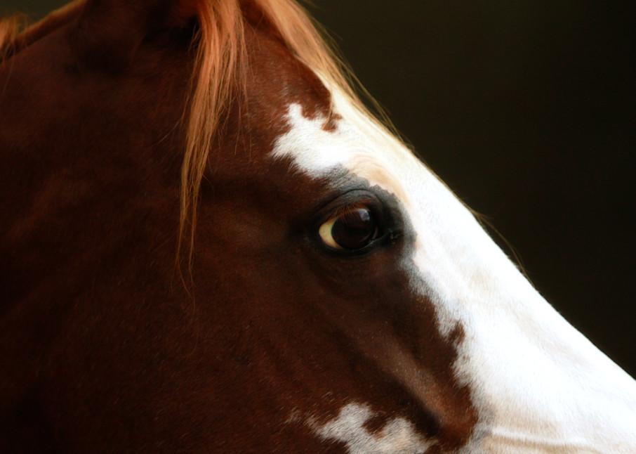 """Puzzled"" Profile of paint horse creates art."