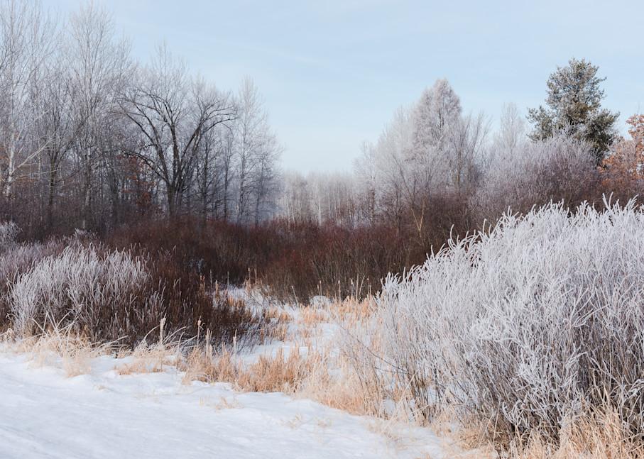 Dogwood Trail Art | studio176